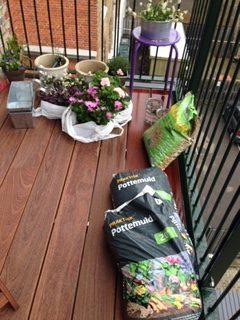 Dronning Ingrid Pelargonie, Lykkekløver, (oxalis), Plante, jord-køb af blomster,Spanske Margeritter i pink